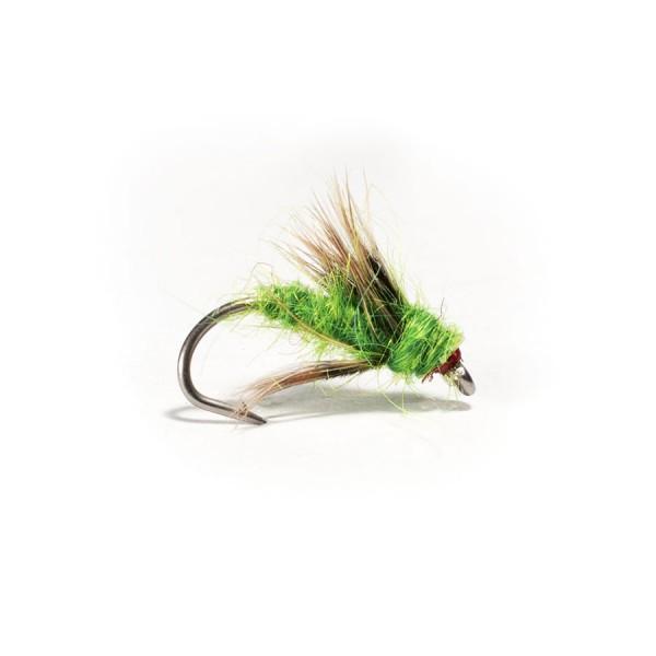 Green Sedge Pupae