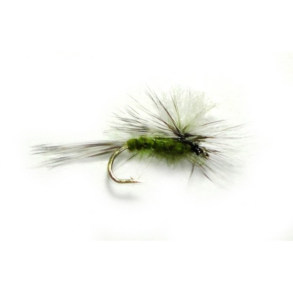 Gulpher Special Olive