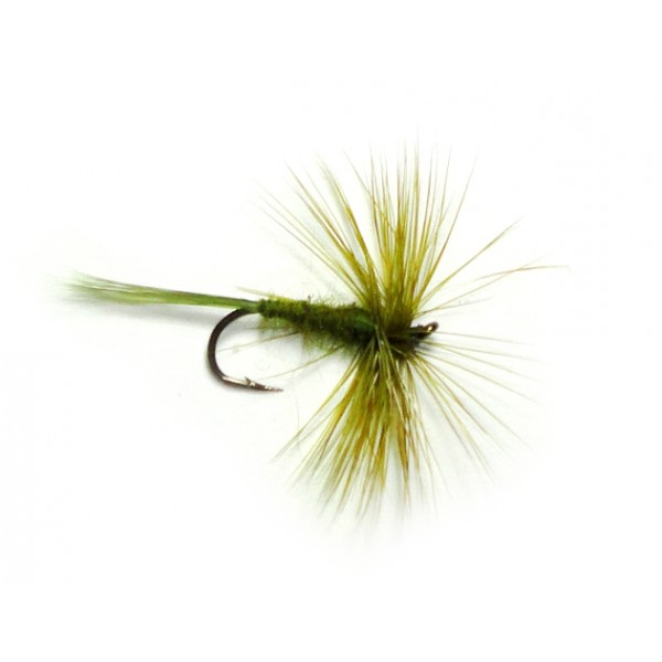 Olive Dun (H)