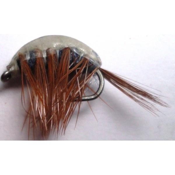 Gamnons Shrimp